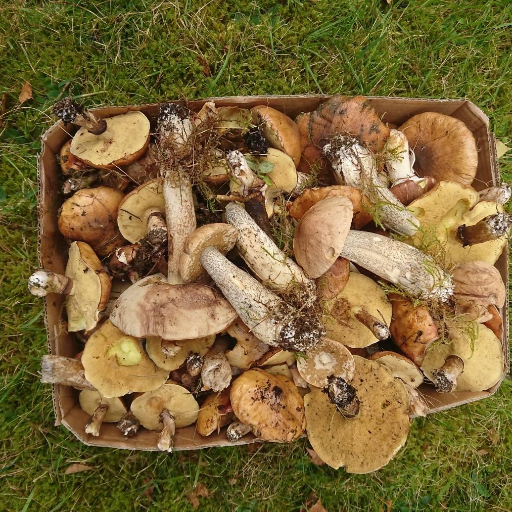 recipe: svampar i gräsmattan bilder [16]