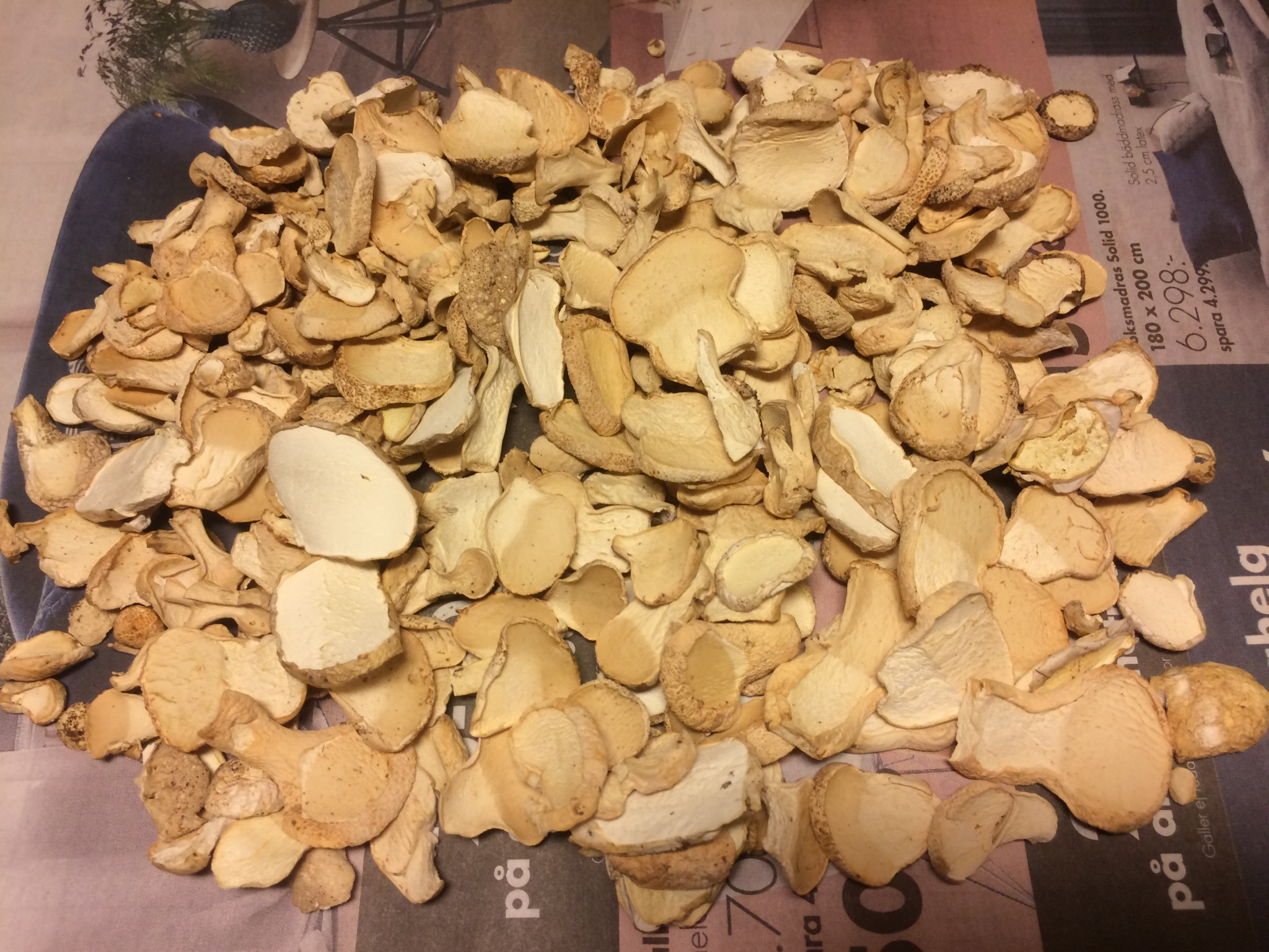 torka svamp i ugn varmluft